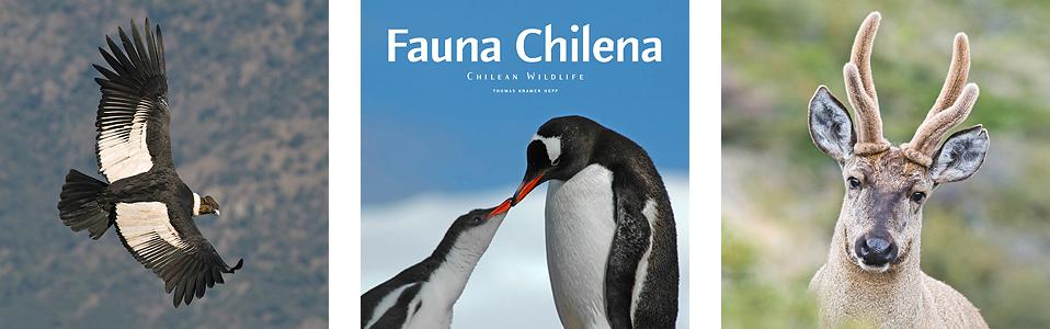 Libro Fauna Chilena por Thomas Kramer Hepp